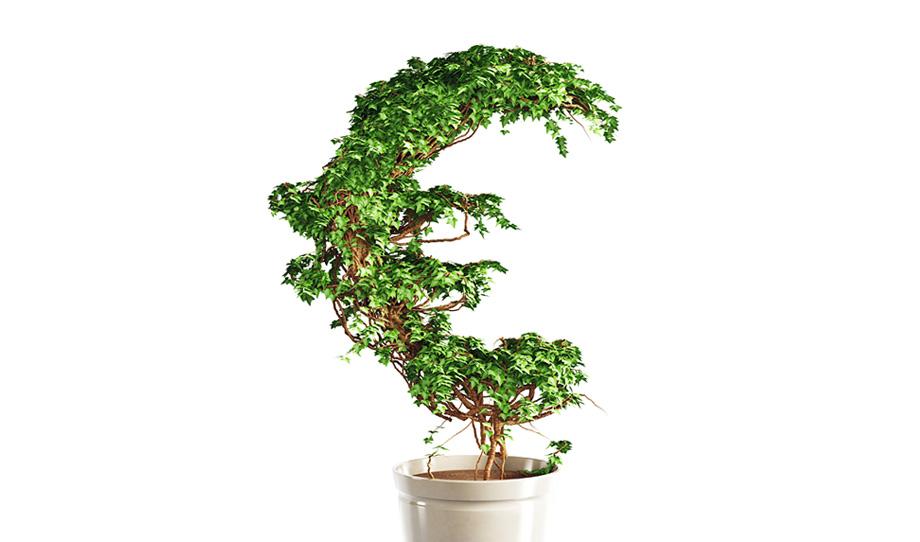 euro-puu